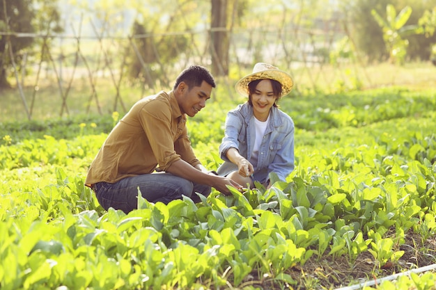 Couple farmers are caring for converting organic vegetables. couple are happy to grow vegetables that are safe to sell.