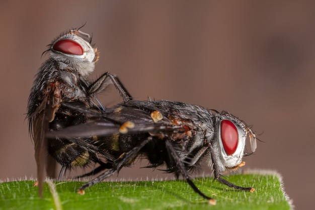 Couple flies on leaf