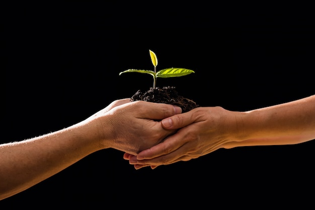 Couple hands holding green plant together in black backgroung