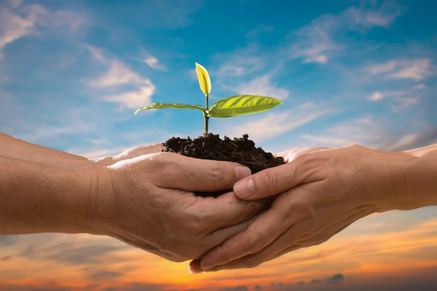 Couple hands holding green plant together on sky background.ecology concept