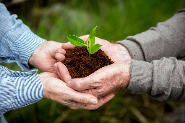 Couple hands holding a pile of earth soil with a growing plant