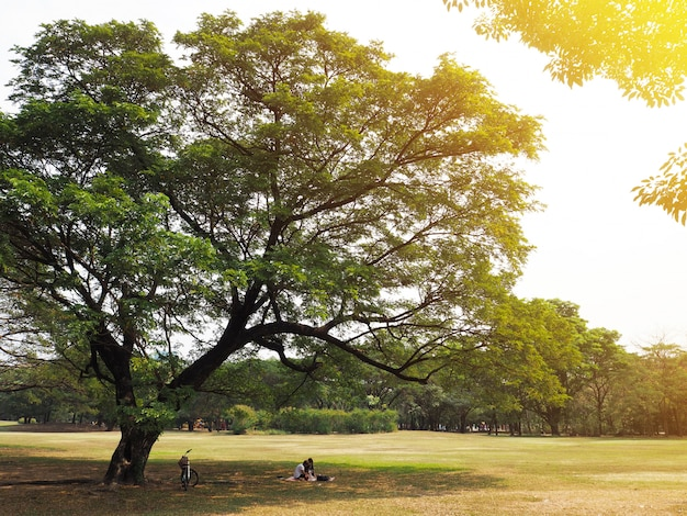 Couple having picnic under the big tree