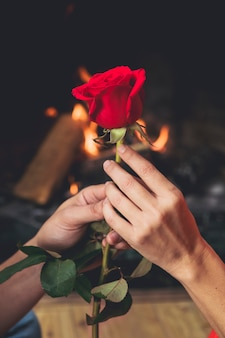 Couple holding bright red rose in hands