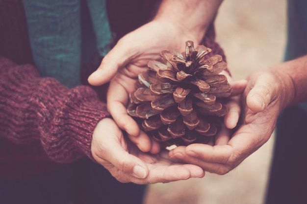 Couple holding a pine cone with their hands