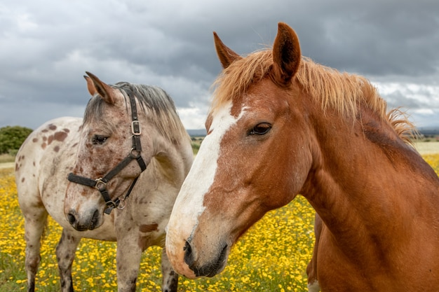 Couple of horses in a sunny day