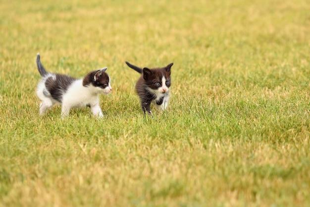 Coppia di gattini che giocano