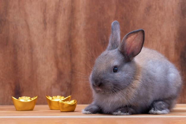 Couple little gray rabbit with chinese ancient gold sitting on brown wooden background at studio