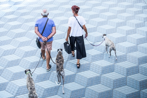 Couple man and woman, adults walking quietly, with three dogs, a summer afternoon, minimalist place