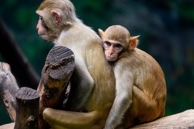 Couple mother and baby monkey at zoo
