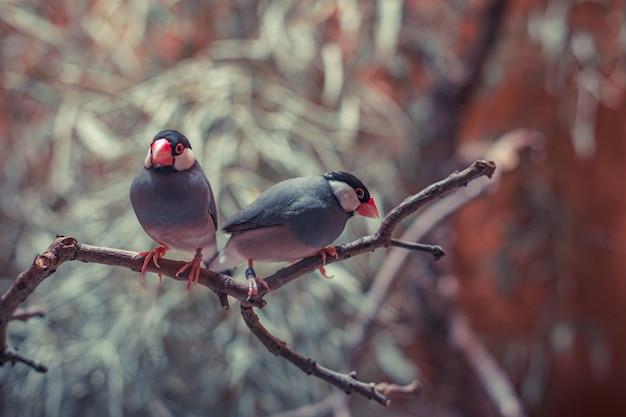 나뭇 가지, 엽서 또는 배경에 새의 커플