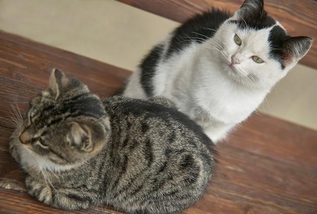 上から持ち上げられた木製のベンチに座っている子猫のカップル、1匹は暗い、もう1匹は澄んでいる。