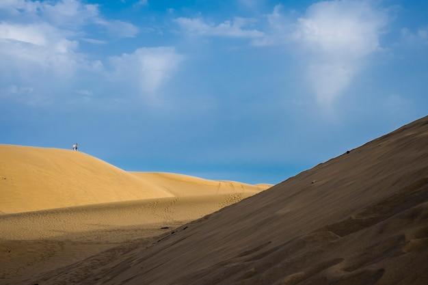 Пара туристов, стоящих на холме дюны в желтой песчаной пустыне. контраст цветов с голубым белоснежным небом. свет и тень. удивительная природа на открытом воздухе