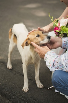 Пара собак на улице