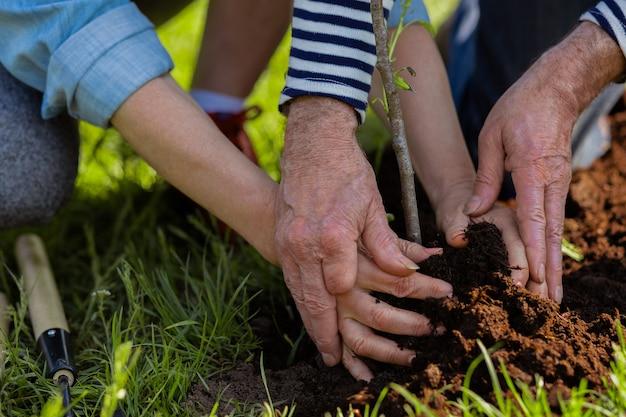 커플 심기. 은퇴 한 남편과 아내가 함께 나무를 심는 사랑의 상위 뷰