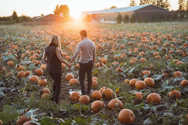 Couple standing in pumpkin field