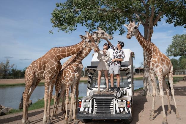Пара принимает автобусный тур, кормит и играет с жирафом в зоопарке открытого парка сафари.
