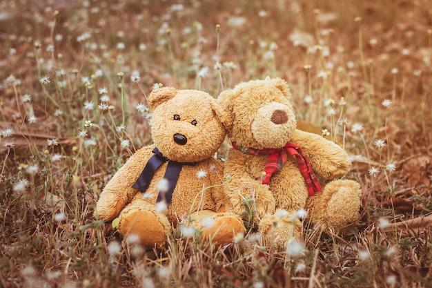 Couple teddy bear sitting on the meadow