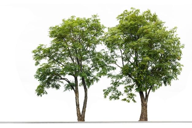 白い背景の上のカップルツリー