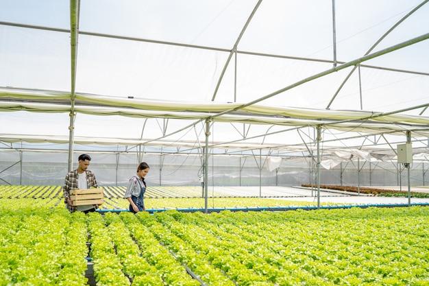 有機野菜事業を行うカップル木製バスケットを使用して収穫市場に販売するために