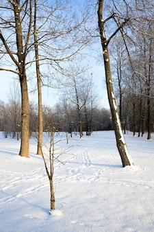 冬はふわふわの白い新雪の森に覆われ、晴れた明るい日の寒い凍るような冬の風景