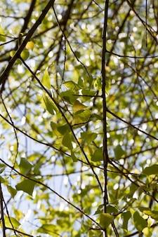 Покрытые зеленой листвой деревья весной или летом, приятная красивая природа и свежий воздух
