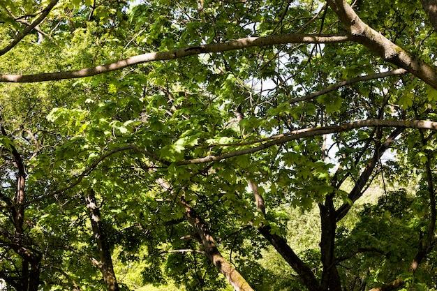 Весной покрытые зеленой листвой