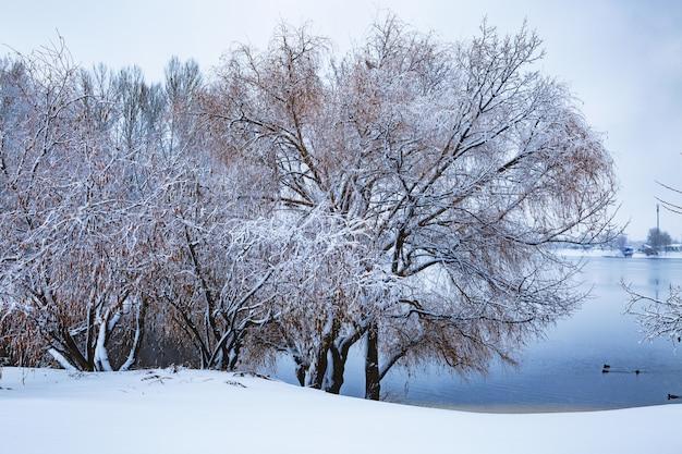 강 유역에 눈과 서리가 내린 숲으로 덮여 있습니다.