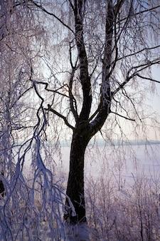 겨울에는 낙엽수로 뒤덮인 하얀 눈이 사방에