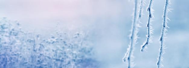 日の出の冬の朝、ぼやけた背景の霧の中で厚い霜垂れ木の枝で覆われています。冬のクリスマスの背景