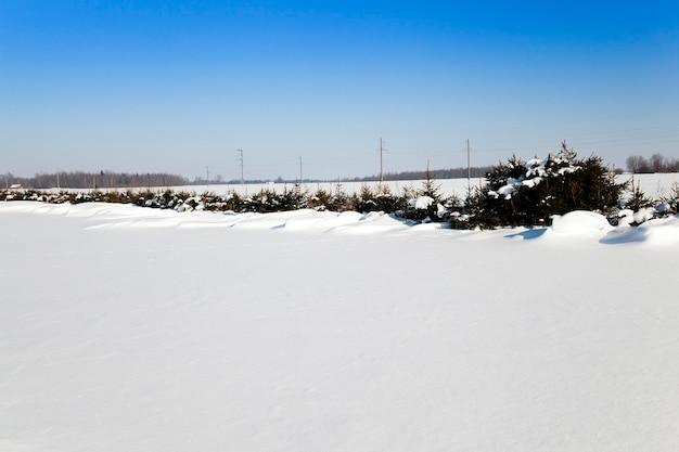 冬は白い雪(雪に覆われた)畑に覆われる