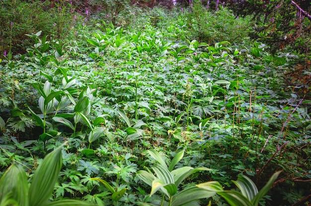 緑の草が生い茂った隠れ家。シベリアタイガ