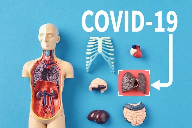コロナウイルスの流行の概念。ウイルスcovid-19は、人間の肺に感染して肺炎を引き起こします。