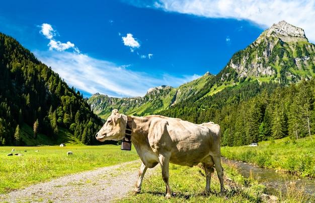 Корова в оберситале в швейцарских альпах