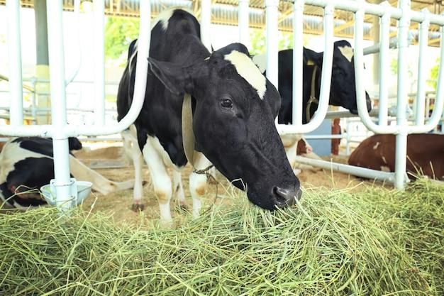 Корова в загоне