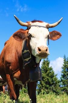 フランスアルプスの風景の中の牛