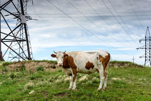 青い雲と投稿の近くに屋外の工業用田舎の緑の牧草地に牛します。
