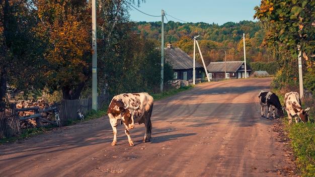 ロシア北部のベプスキー森林国立公園にある木造家屋のある古い村の路上で牛