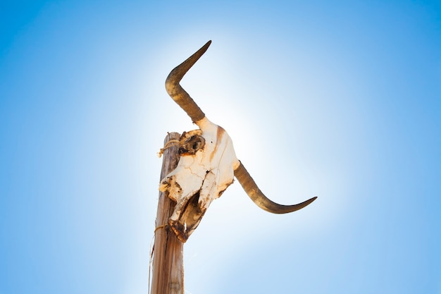Cow skull on a post