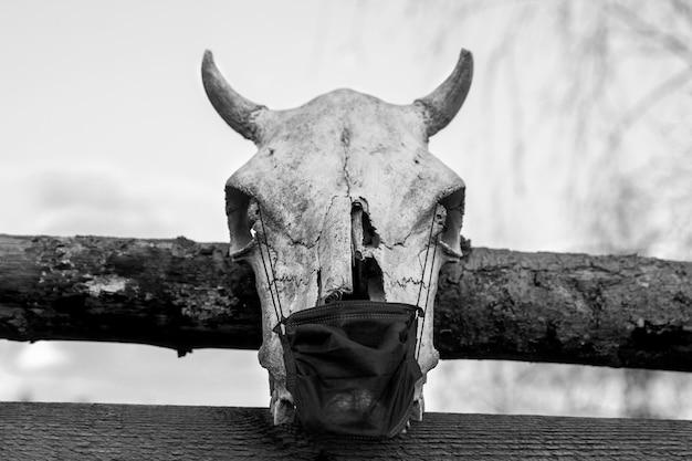 柵に掛かっている保護マスクと牛の頭蓋骨