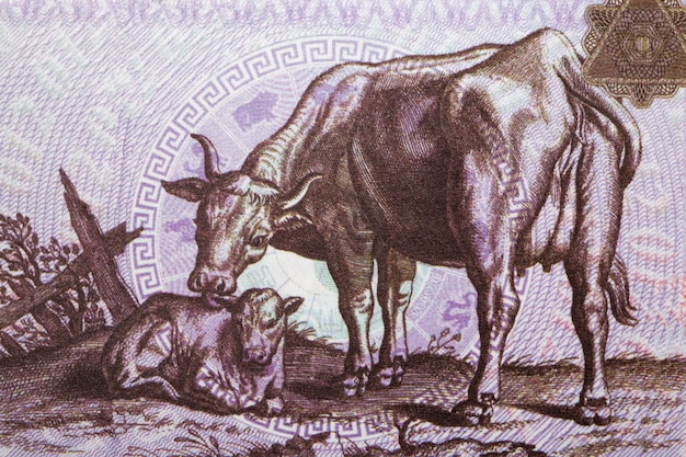 Cow with a calf from chinese money