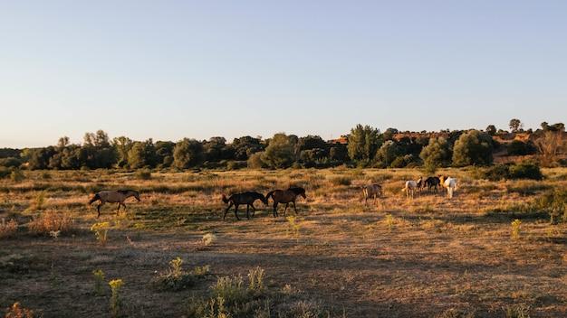 田舎の日当たりの良い畑で放牧している牛