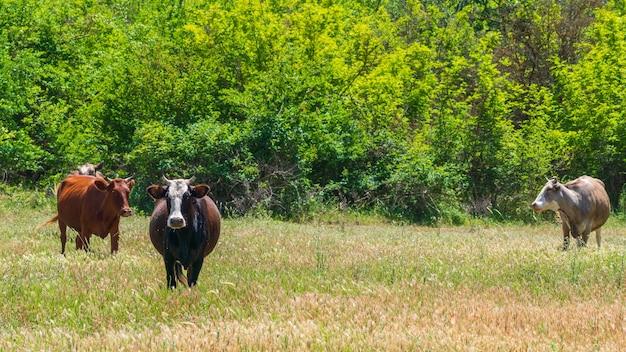숲에서 개간 소