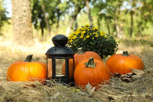 カボチャとキャンドル屋外で居心地の良い秋のコンセプト