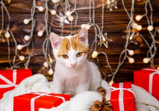 Уютный капризный зимний вечер. праздники и домашние животные. кошка в рождественском интерьере дома. забавный котенок ждет санта-клауса. пушистый кот сидит в боке рождественских праздничных огней на белом одеяле дома.
