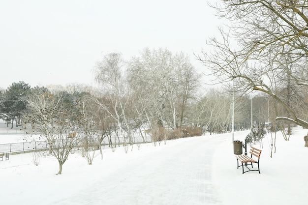 素晴らしい冬の天候で雪のある居心地の良い公園