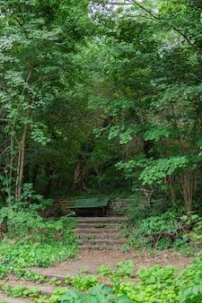 公園の居心地の良い小道フォルクスパークプレンツラウアーベルク、古い木製のベンチ