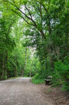 Volkspark prenzlauer berg 공원의 아늑한 길, 오래된 나무 벤치