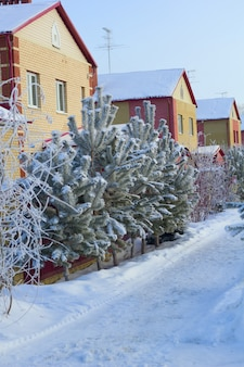 Cozy street with brick houses in winter with snowy trees