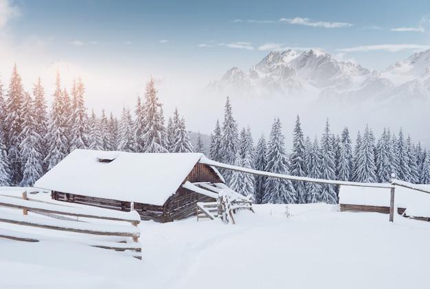 雪山の高い居心地の良い木造の小屋。背景に素晴らしい松の木。放棄されたコリバ羊飼い。カルパティア山脈。ウクライナ、ヨーロッパ