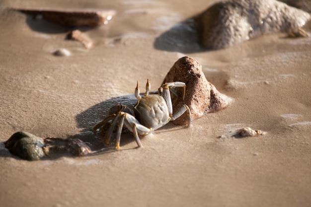 게는 젖은 모래 해변에서 실행
